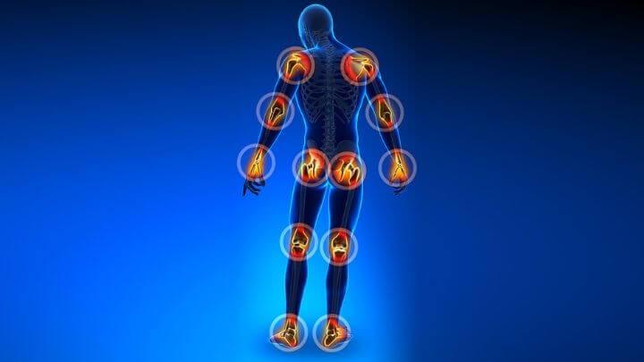 Human body joints illustration