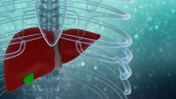 Healthy liver illustration