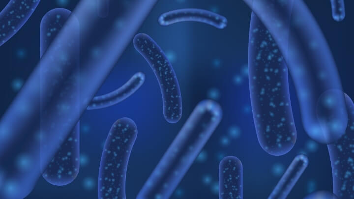 Lactobacillus Acidophilus 3D render