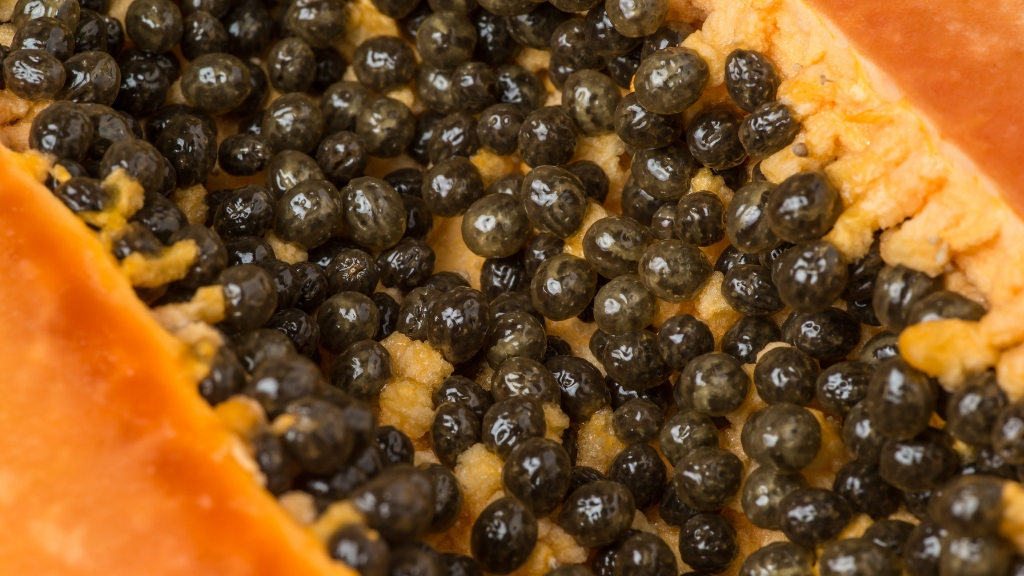 Health Benefits Of Papaya Seeds For Digestion, Hypertension