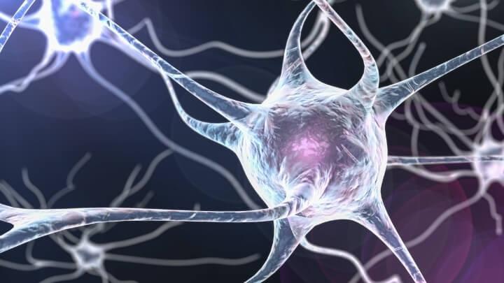 3-D illustraion of neurons