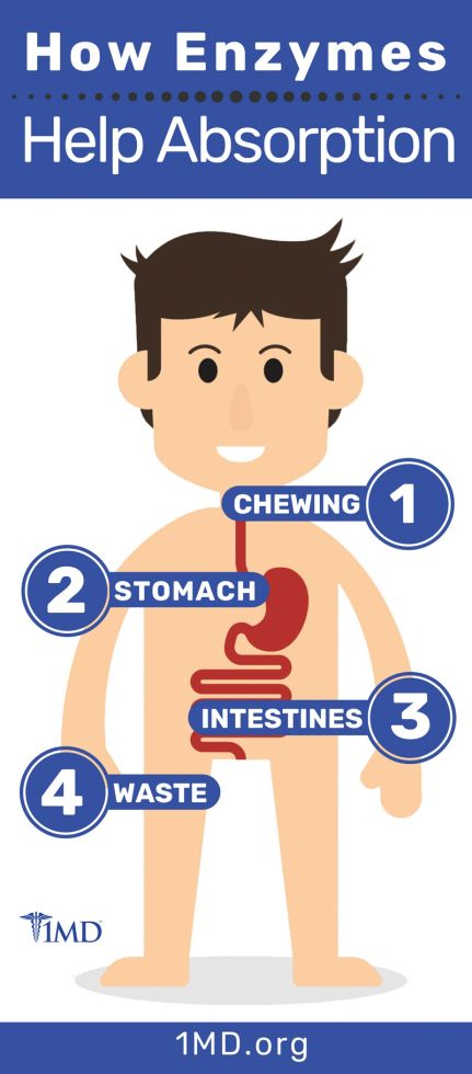 What Are Digestive Enzymes 1md