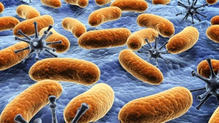 Illustration of bacteria on a kitchen sponge surface