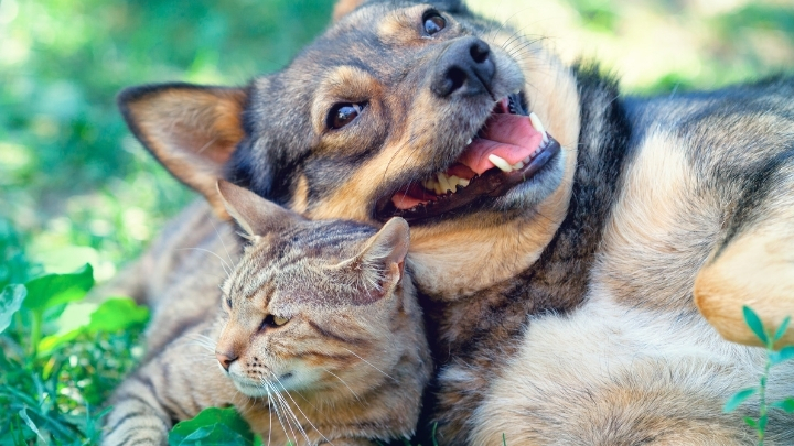 A cat and a dog playfully lying next to each other