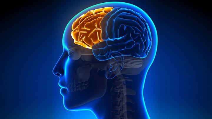 Frontal lobe of the brain