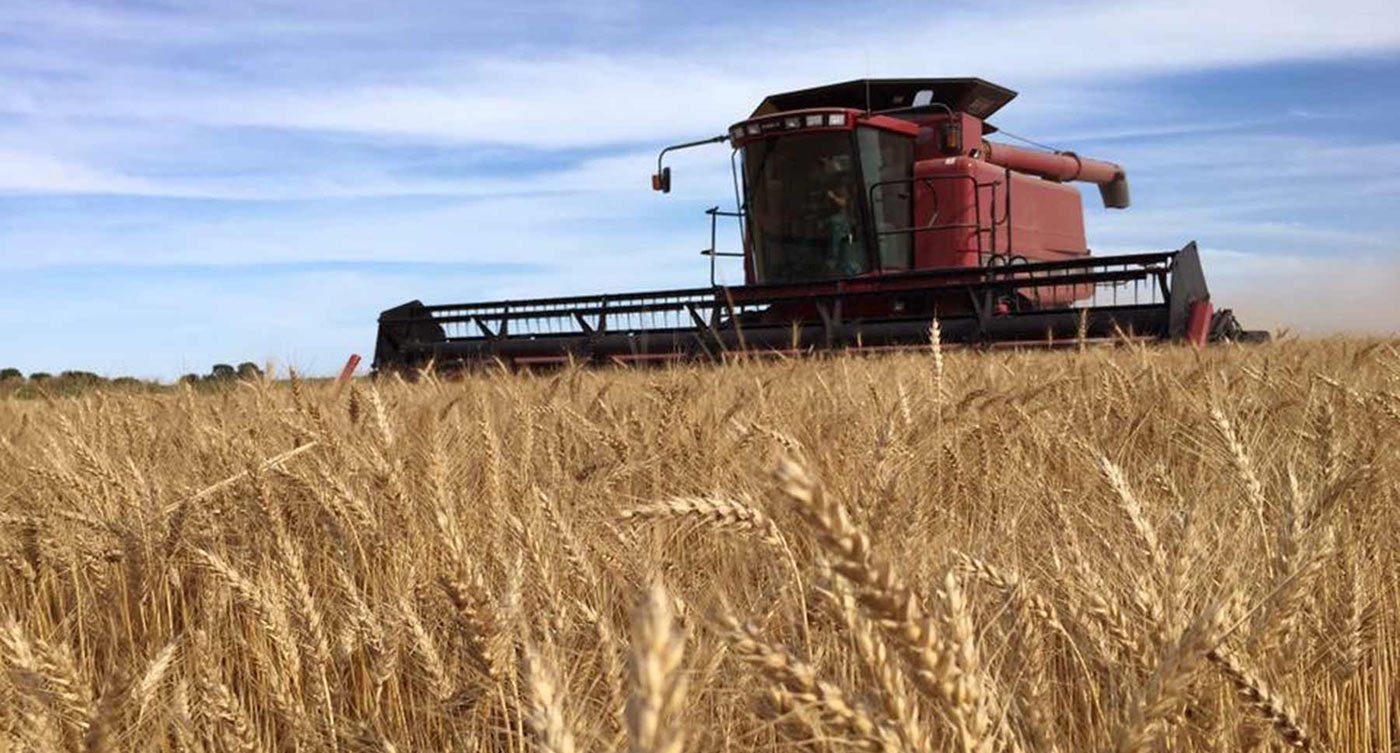 Saathoff combine header crop3 IMG 1934