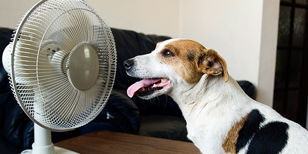 Why You Should Install a Ductless Split as Your Second-Floor Air Conditioning Unit