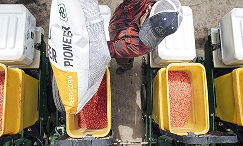 Seed 20190702 COR Corn Seed Goodhue County Minnesota 0166
