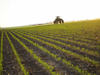 Corn Rootworm: Scouting and Management Strategies
