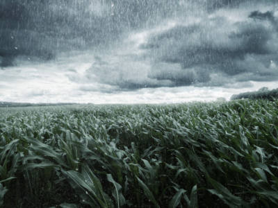 Flooding Impact on Crops