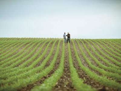 Control Early Season Weeds in Corn
