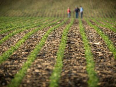 Soybean Seed and Seedling Diseases