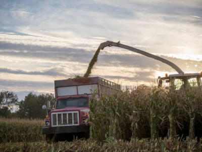 Management of Drought-Stressed Corn Silage