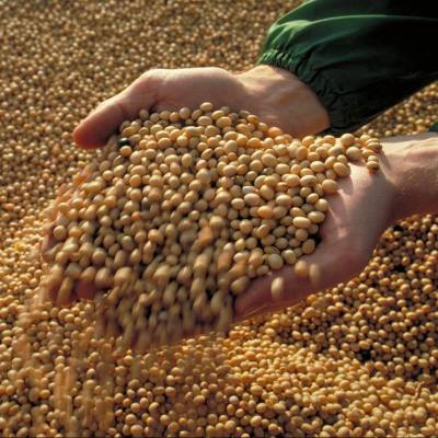 Reducing Harvest Losses in Soybeans