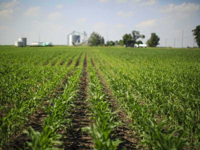 How to Determine the Growth Stage of Corn at V6