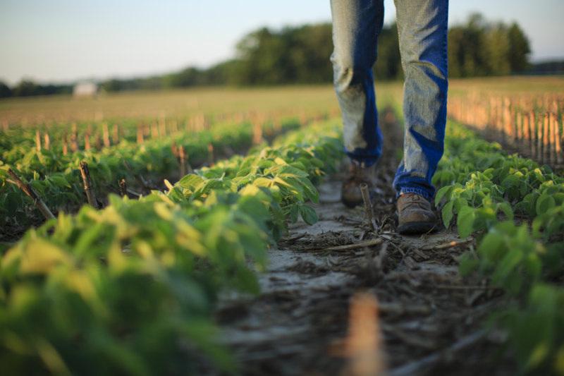 20190926 COR Crop Protection Soybean 0260