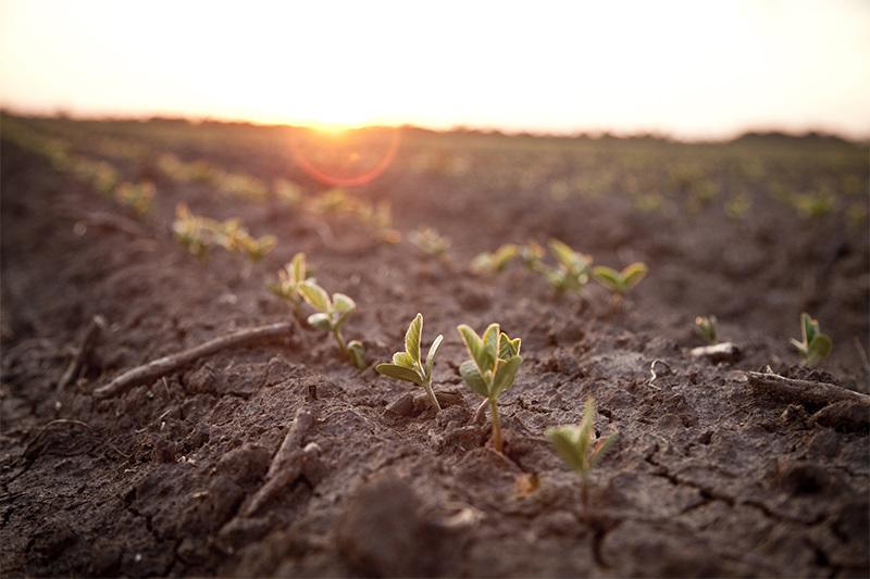 20190926 COR Crop Protection Soybean 0320
