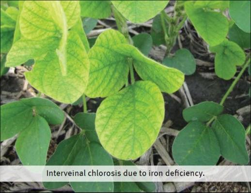 Pioneer soy soil fertility 4