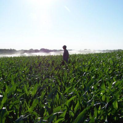 In-Season Crop Consulting