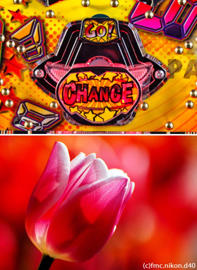 一般的な電チュー(上)とチューリップの花(下)