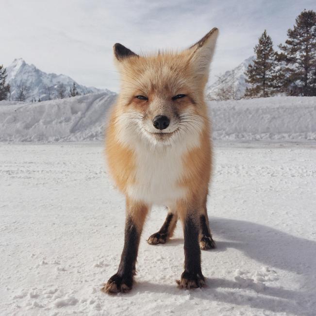 (iPhone photos) Michael O'Neil - Animals