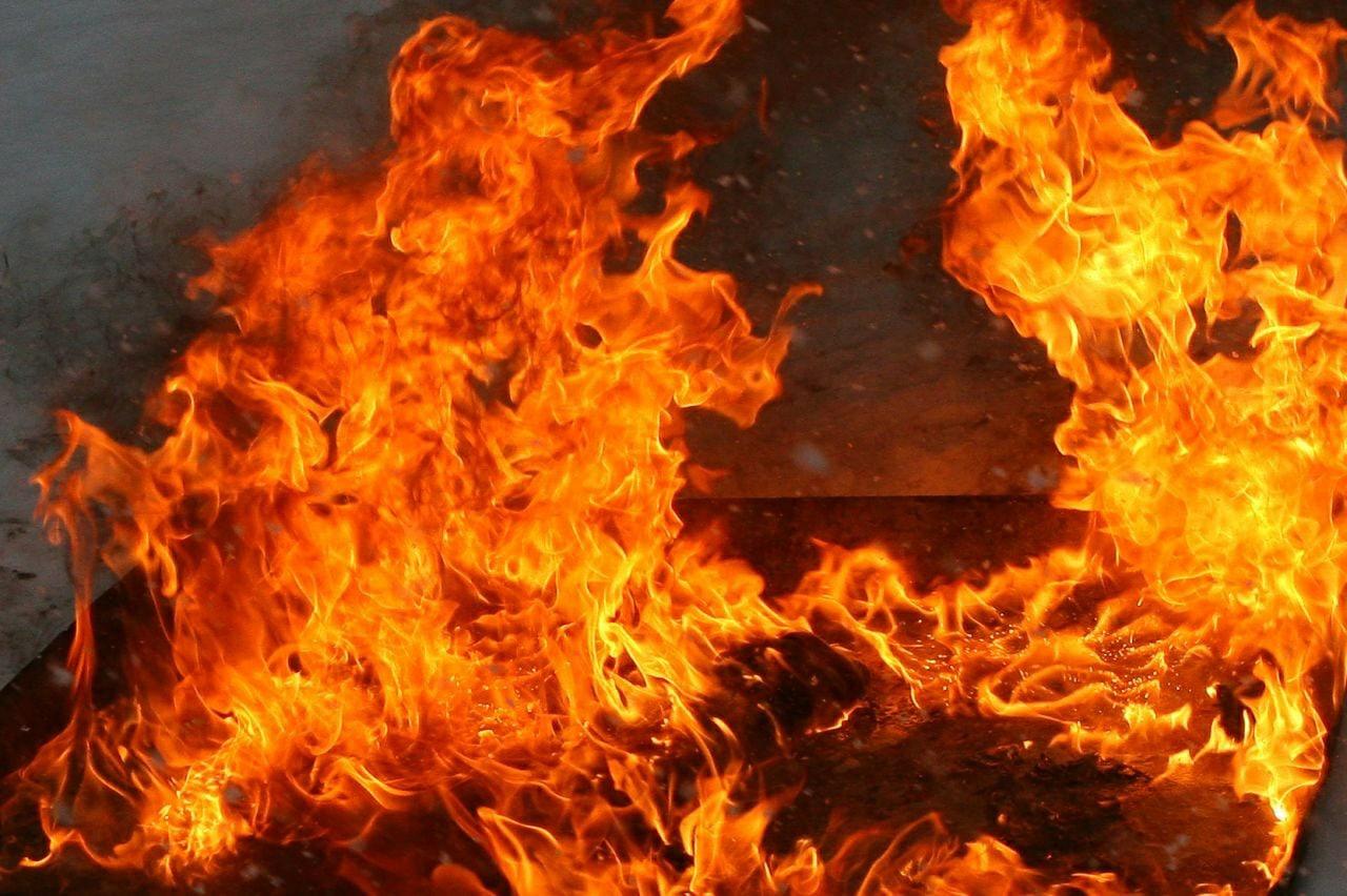 В Плесецке сгорела зоогостиница, принадлежащая активистке Шиеса