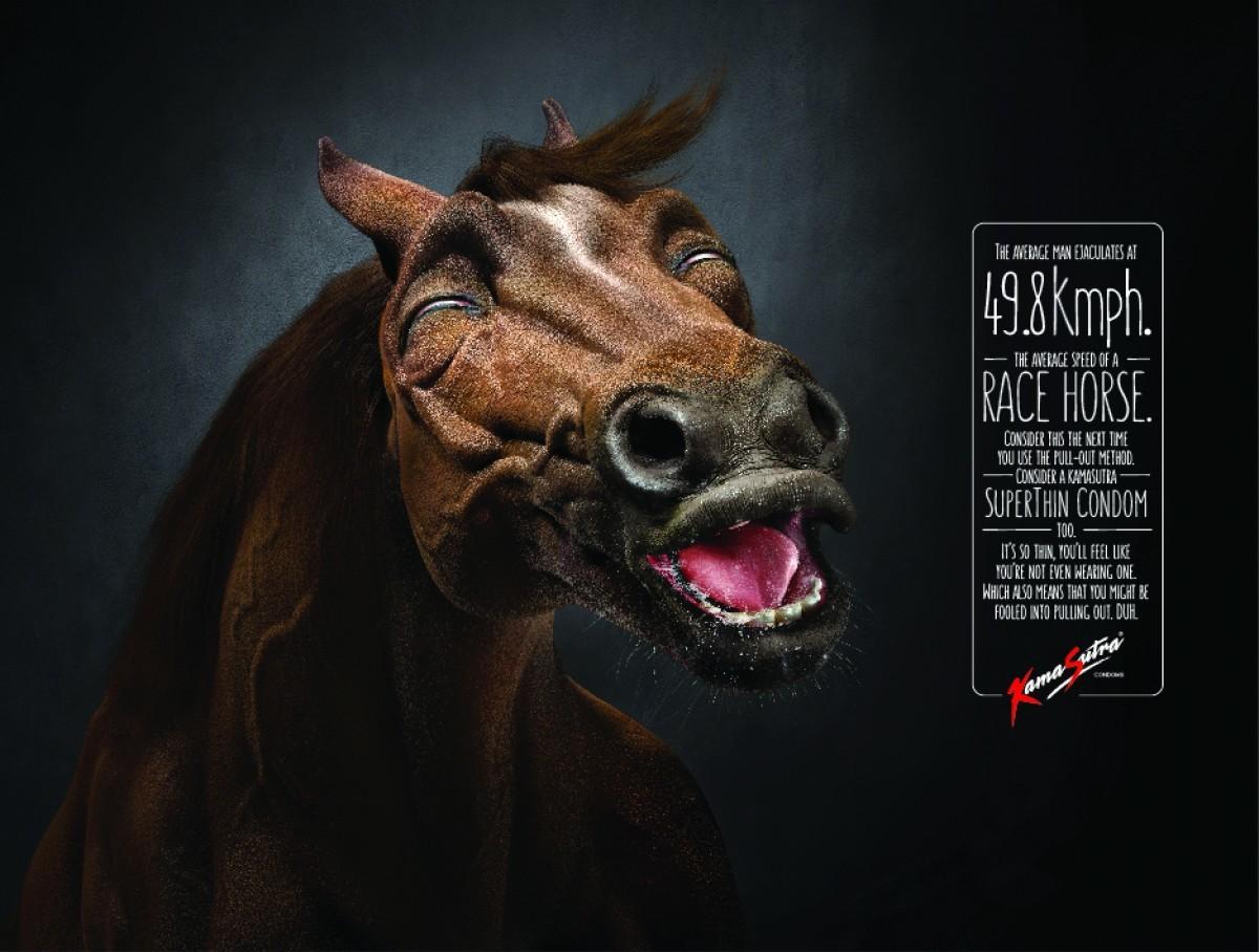 Horse Condom