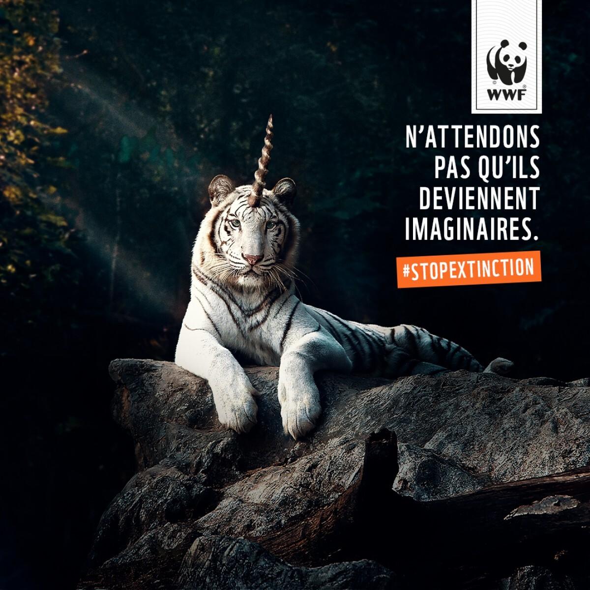 Wwf Le Tigre Ce Monstre Sacre