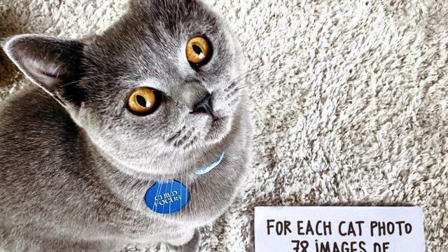 #CatsforKids