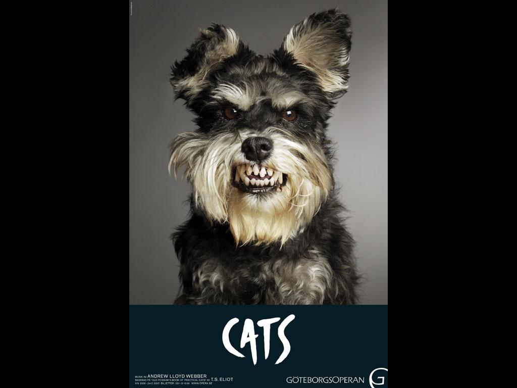 The Musical Cats Schnauzer