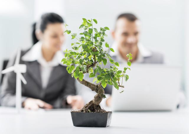 Quer aumentar a produtividade? Coloque uma planta na mesa