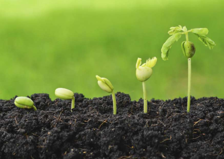 Você está disposto a pagar o preço para crescer?