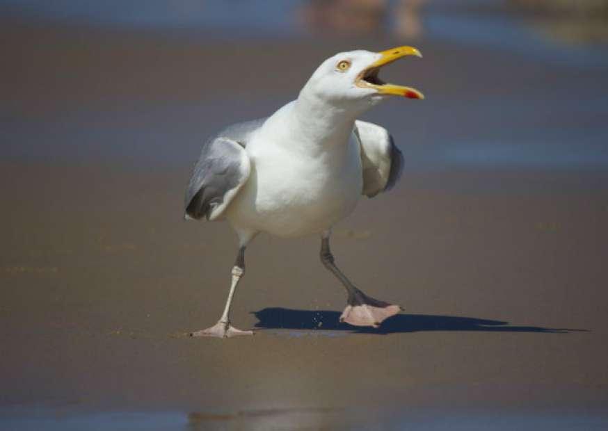 Você é um gerente gaivota?