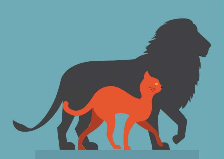 Gestão por competências – Como transformar gatos em leões?