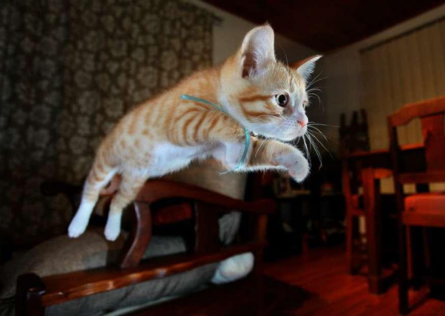 Marketing Digital: o pulo do gato