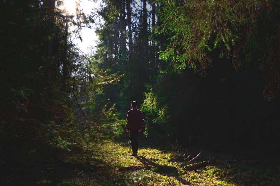 Florestas, biodiversidade e pobreza