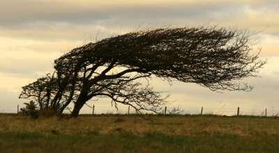 Como fazer os seus objetivos profissionais serem mais resilientes