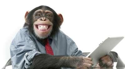 O que os chimpanzés podem nos ensinar sobre sucesso e fracasso?