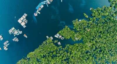 Aruanas: uma história inspiradora sobre ética, propósito e sustentabilidade