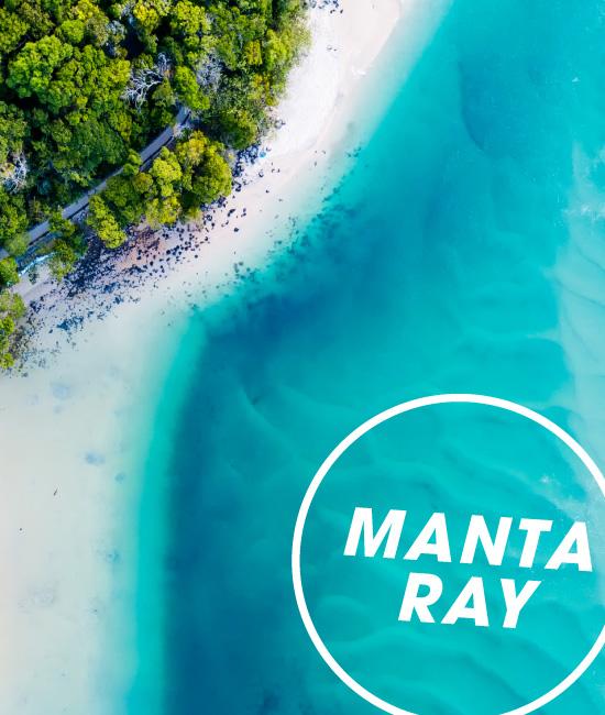 Manta Biology | MCC  |Manta Ray Range