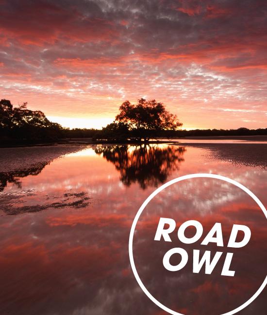 Road Owl