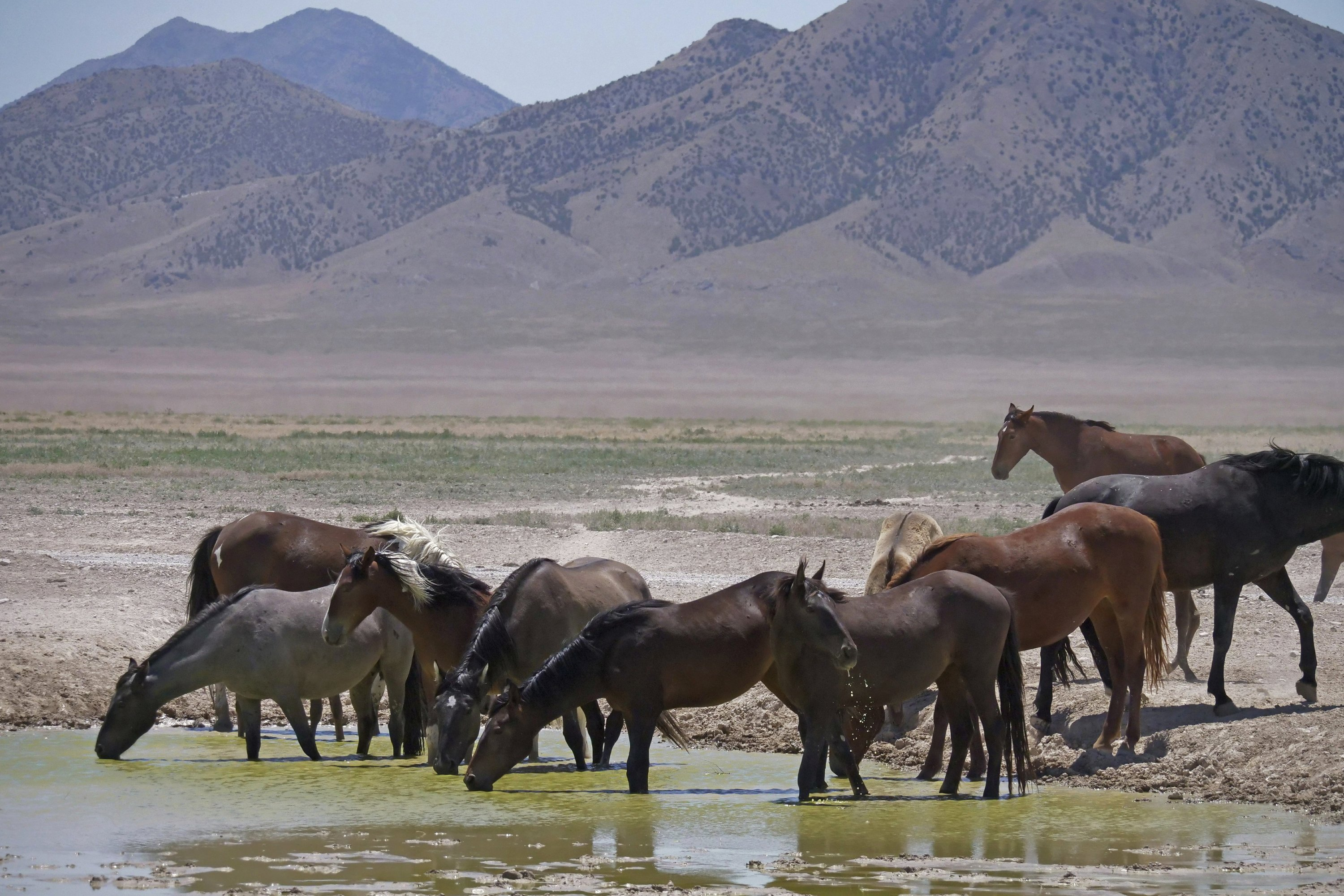 3 Large Corrals Approved For Western Us Wild Horse Roundups