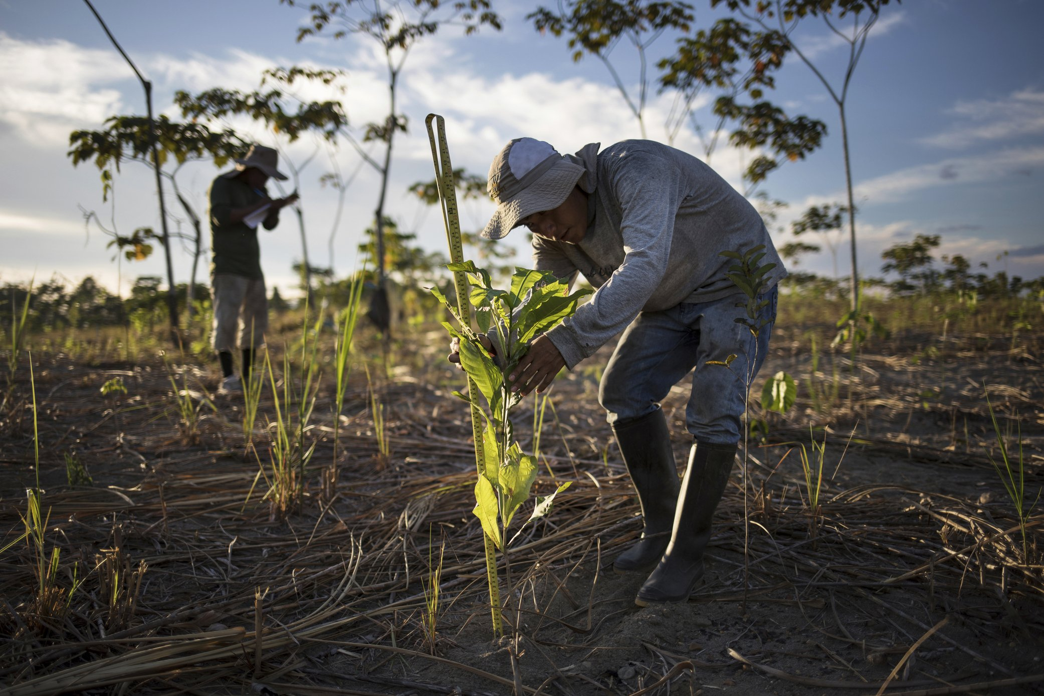 In restored forests, hope for world beset by climate change