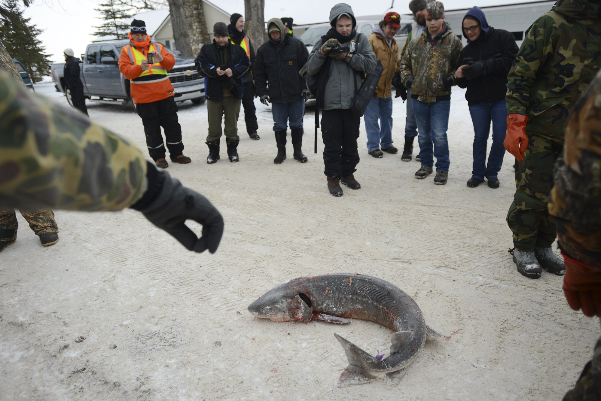 Federal agency to consider protections for lake sturgeon