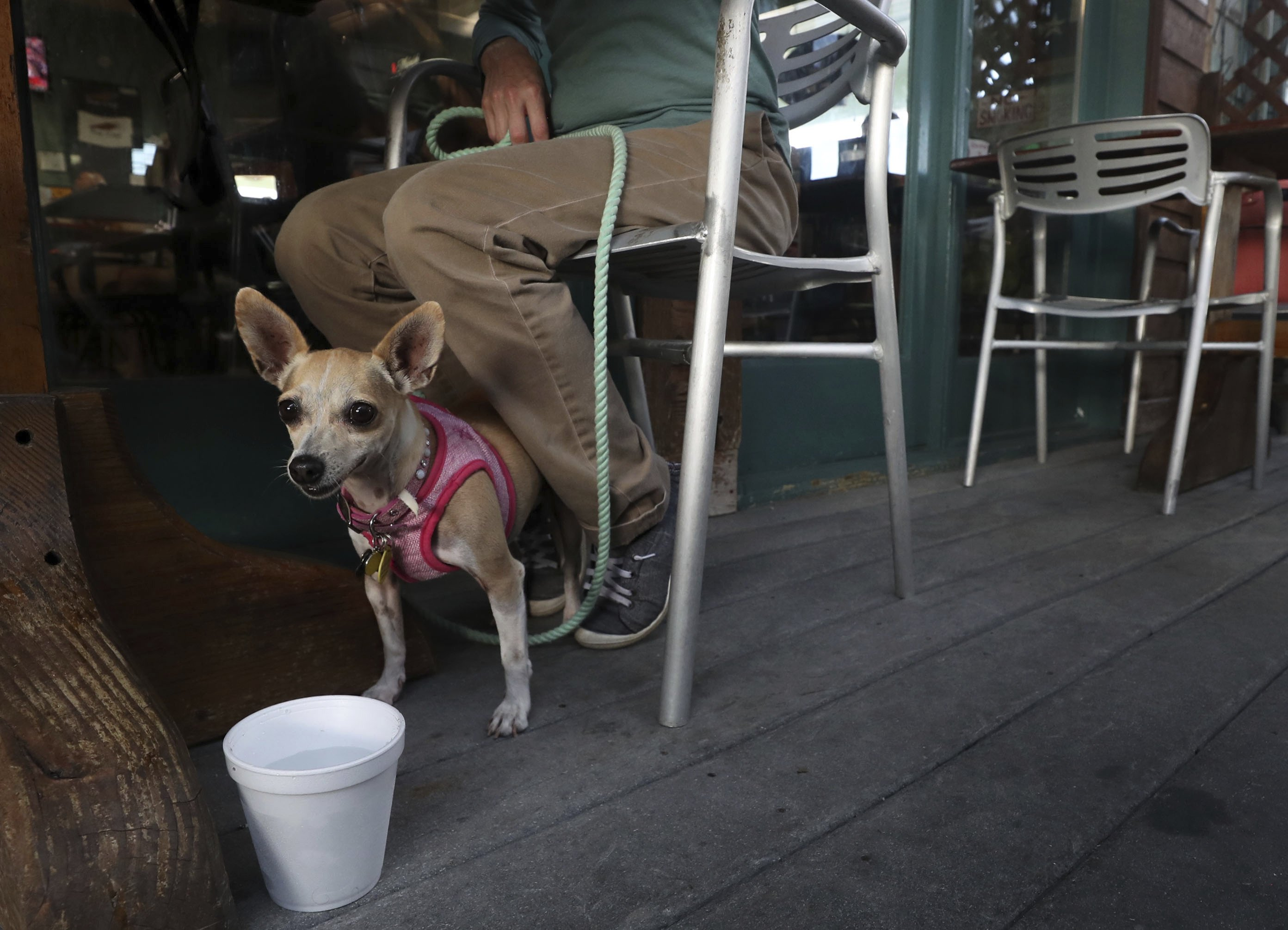 Law allows Texas patrons to dine with dogs in certain areas