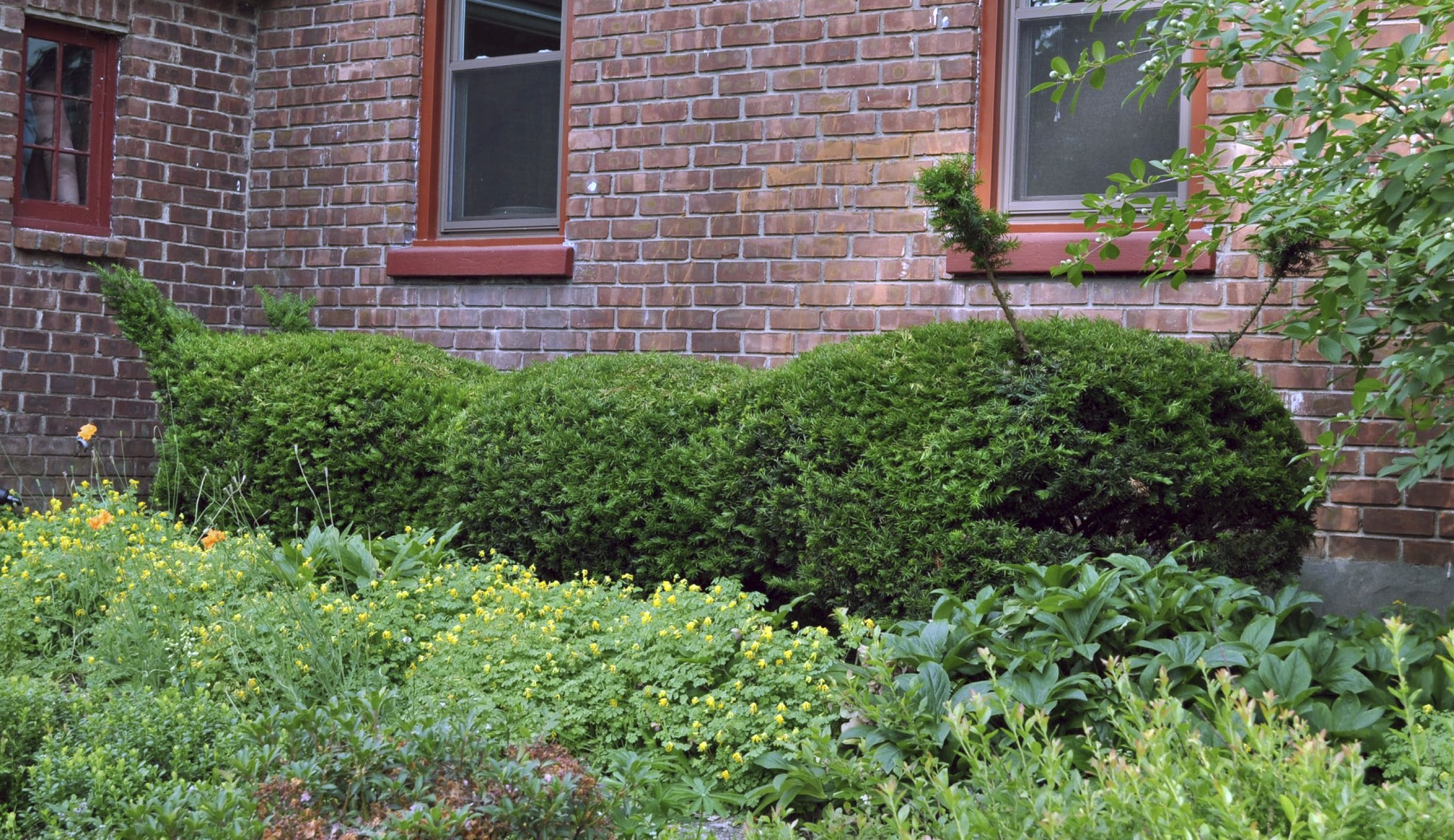 Topiary Tips When You Want Shrubs To Double As Sculpture