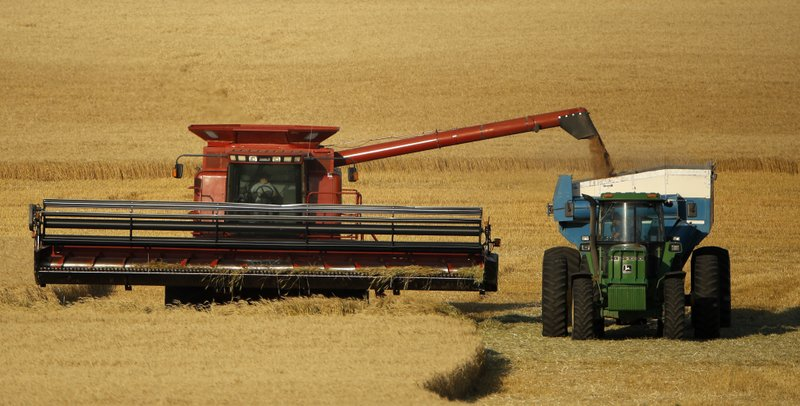 Harvesters growing increasingly anxious about whether the foreign seasonal workers will arrive in time for the winter wheat harvest