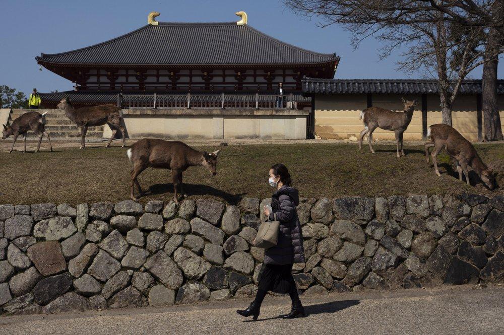 Рай для оленей: в древнем японском городе рогатые животные ходят по магазинам и ресторанам (ФОТО)