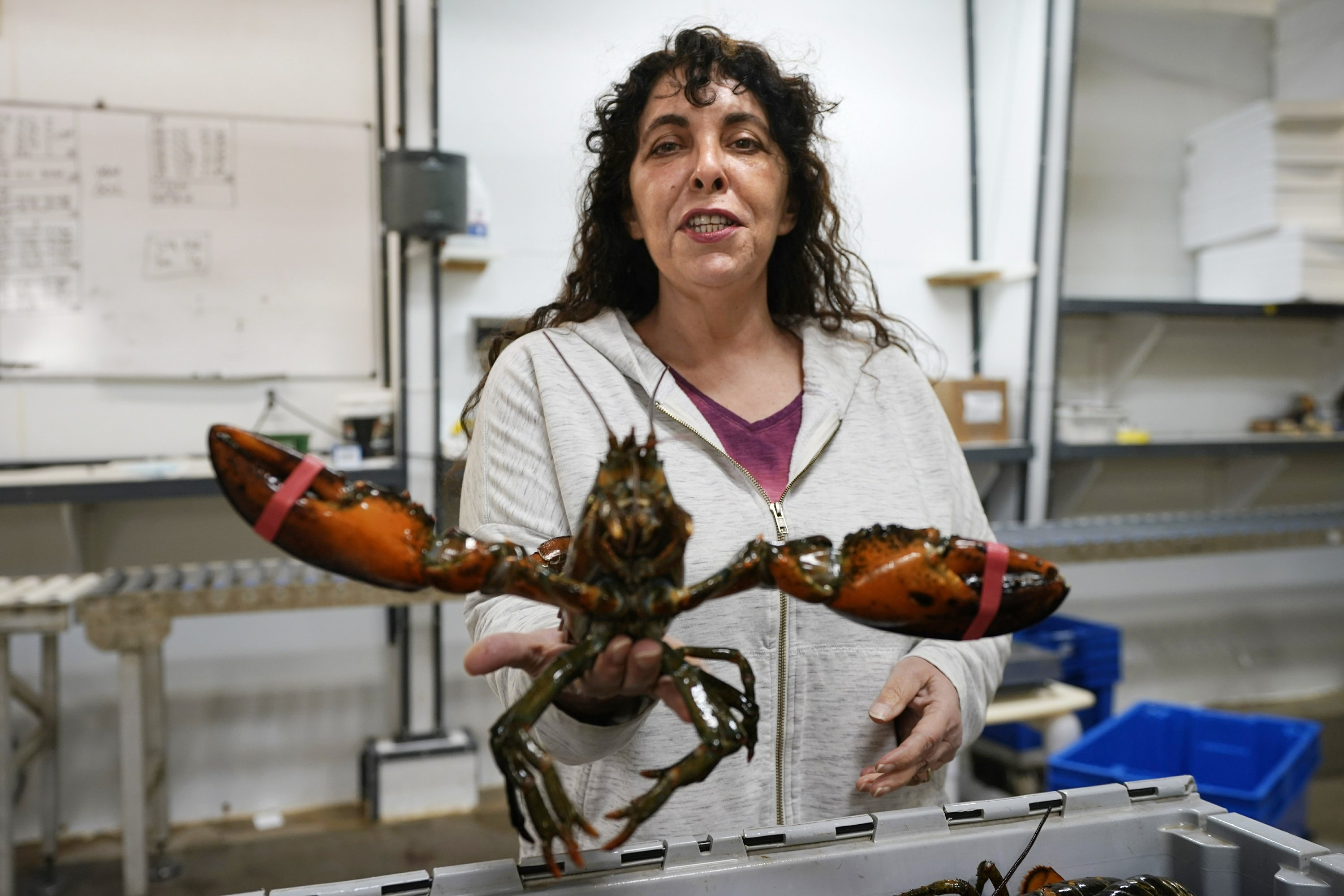 Lobster biz hopes for stability after tumultuous Trump era – Associated Press