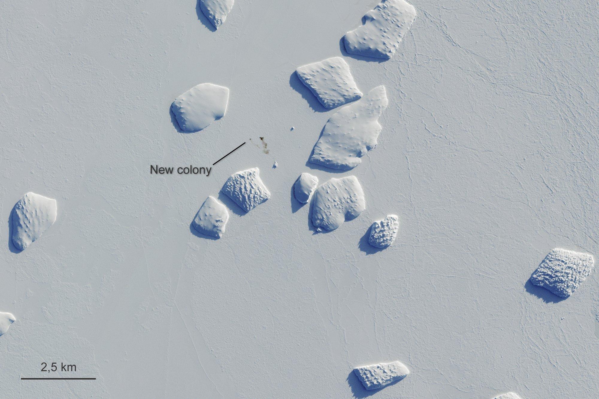Poop scoop: Satellite images reveal Antarctic penguin haunts